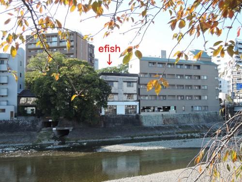 151104-efish-01