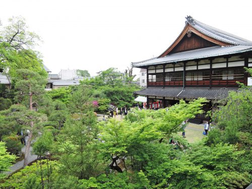 160424-miyakoodori11