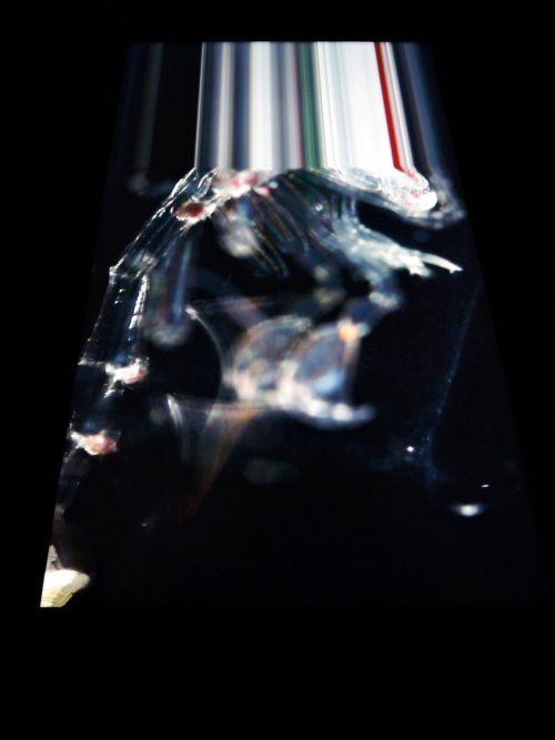 160505-plankton20
