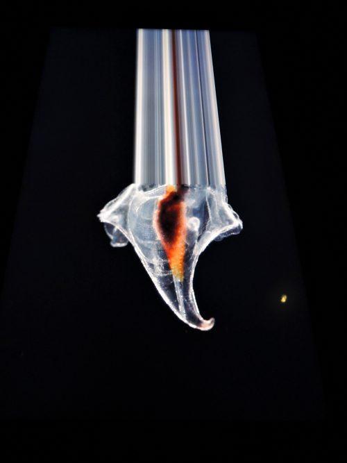 160505-plankton23